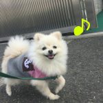 【募集中】5月22日&6月19日犬と飼い主が幸せになる手作りご飯講座全2回コース